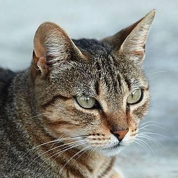 Tracey Harrington-Simpson - Stunning Tabby Cat Close Up Portrait