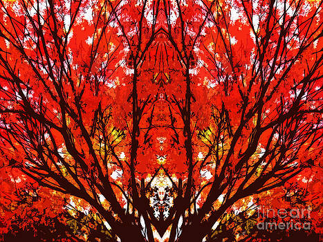 Beverly Claire Kaiya - Stylized Maple Tree with Red and Orange Leaves