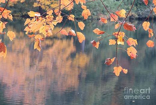 Subtle Autumn Reflections by Anita Adams