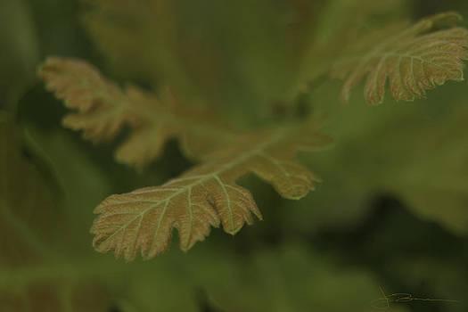 Subtle Green by Jim Bunstock