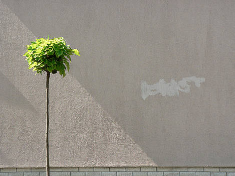 Suburban Minimalism by Csaba Molnar