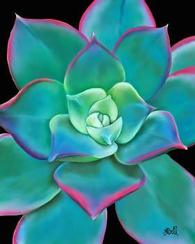 Succulent Aeonium Kiwi by Laura Bell