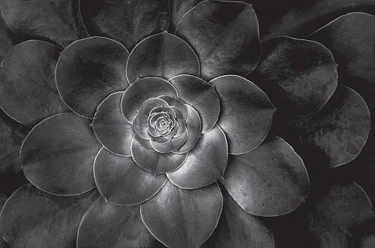 Harold E McCray - Succulent plant