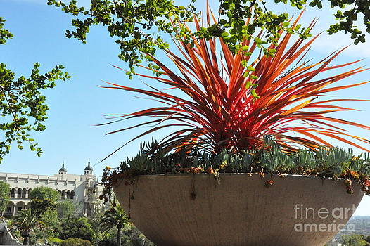Succulent Planter on University of San Diego Campus  2 by Tanya  Searcy