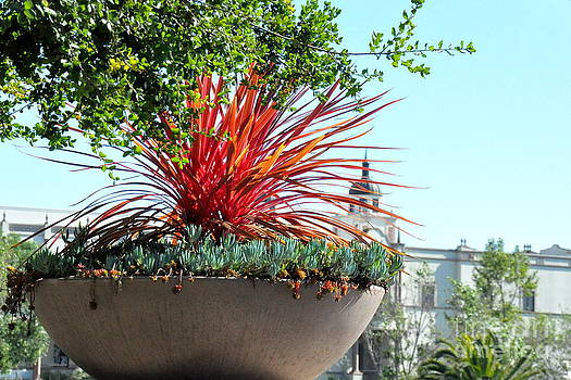 Succulent Planter on University of San Diego Campus by Tanya  Searcy