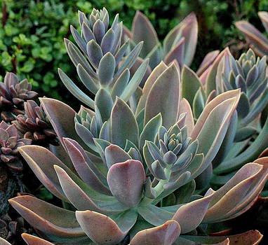 Rosanne Jordan - Succulents #2