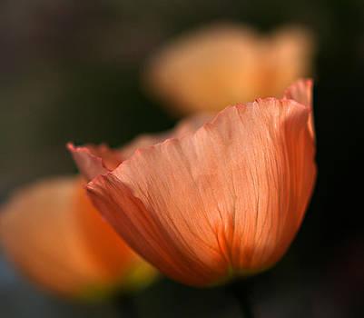 Suenos de Flores by Joe Schofield