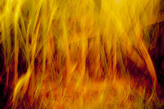 Sugar Cane - The Fire by Paul W Sharpe Aka Wizard of Wonders