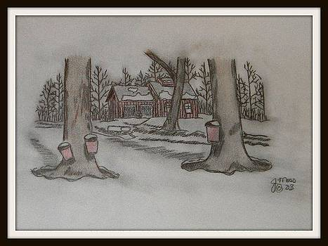 Sugar Trees by Janet Moss