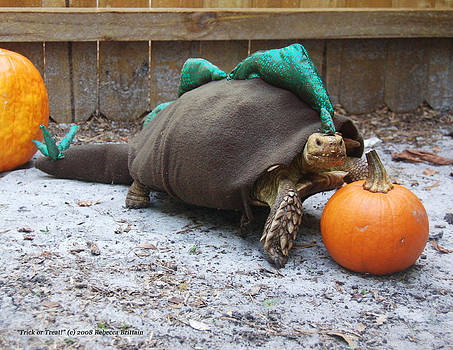 Rebecca Brittain - Sulcata Tortoise Halloween Costume