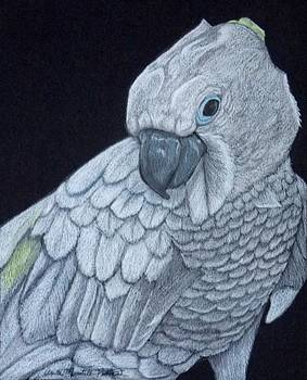 Sulpher-crested Cockatoo by Anita Putman