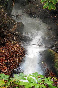 Rachael Shaw - Sulphur Spring