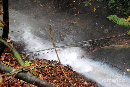 Rachael Shaw - Sulphur Stream