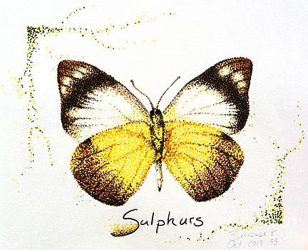 Sulphurs - Butterfly by Katharina Filus