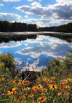 Summer Adirondack Lake In Bloom by David  Jones
