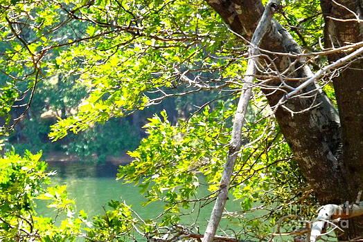 Summer at the lake by Deborah Yeager