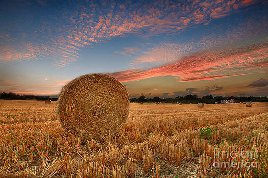 Summer Bales by Pete Reynolds