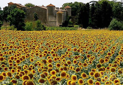 Summer Bliss by France  Art