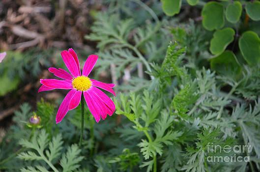 Summer Bloom by Kiana Carr