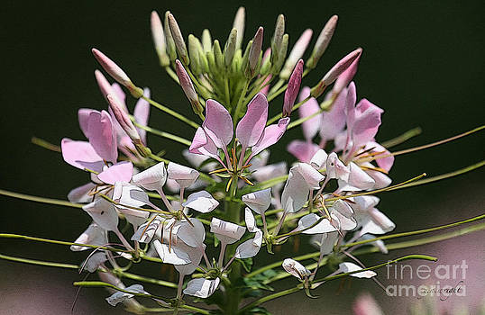 Summer Blossom by Yvonne Wright