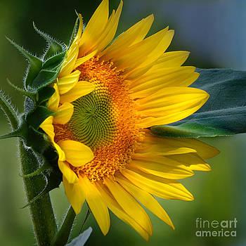 Summer Bonnet by Nava Thompson