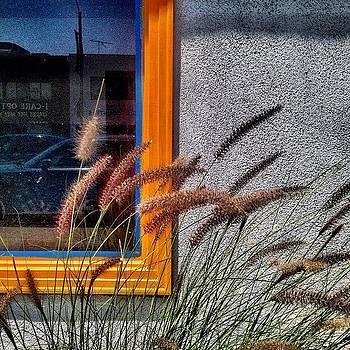 Summer Breeze by Lauren Dsf