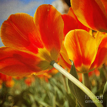 Summer Burst by Sharon Coty