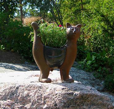 Summer Cat by Leena Pekkalainen