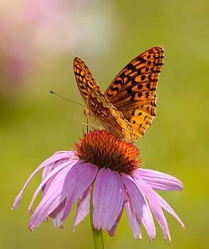 Lara Ellis - Summer Colors Butterfly