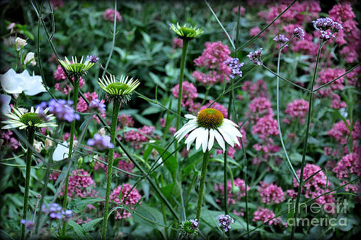 Summer Colors by Tanya  Searcy