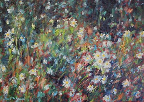 Summer Daisies by Daniel W Green