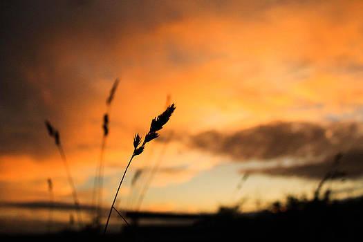 Summer fields  by Catherine Davies