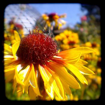 Summer flower - Through the Viewfinder  by Gemma Geluz