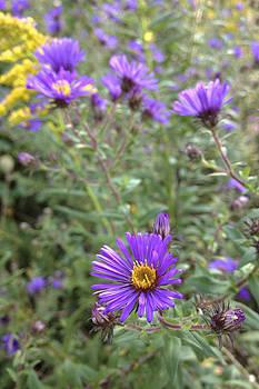 Daniel Kasztelan - summer flowers