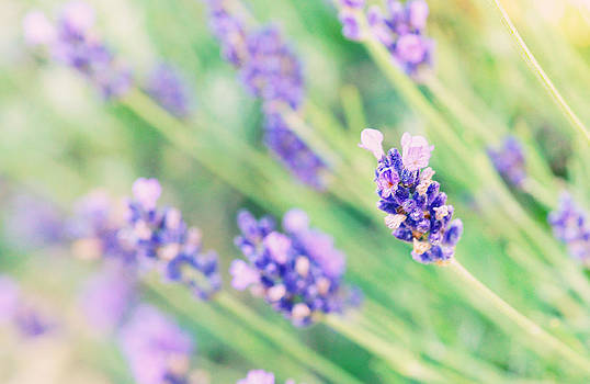 Summer flowers in pastel by Dick Wood
