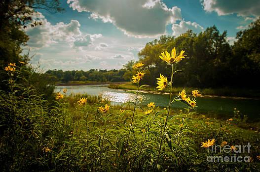 Summer Flowers by Kerri Garrison