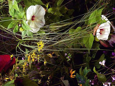 Summer Garden by Ethel Rossi