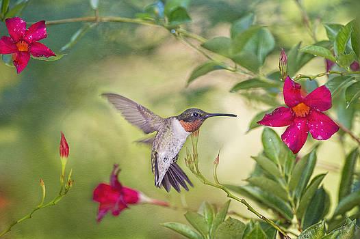 Summer Garden Hummingbird by Bonnie Barry