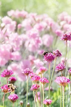Jo Ann Snover - Summer garden