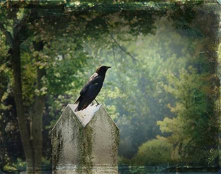 Gothicrow Images - Summer Gothic Crow