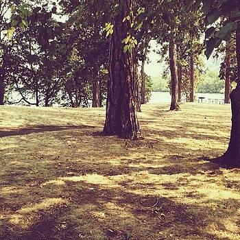 Summer Grass by Rebecca Guss