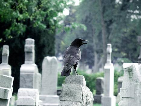 Gothicrow Images - Summer Graveyard