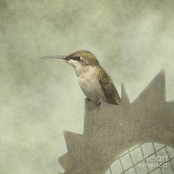 Summer Hummer by Pam  Holdsworth