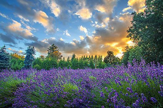 Summer Lavender by Josh Kulla