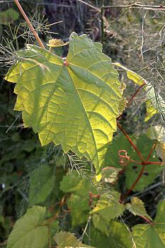 Daniel Kasztelan - summer leaves