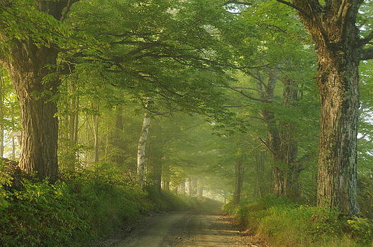 Summer Morning, Cory Hill Road by Gerald Hiam