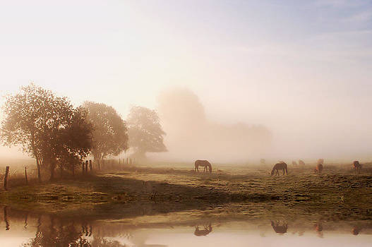 Summer Morning by Jay Evers