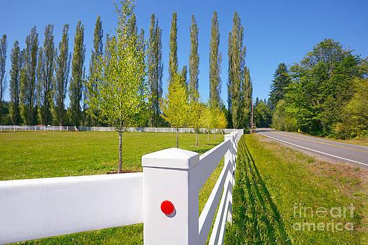 Jo Ann Snover - Summer pasture