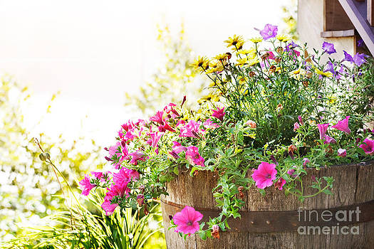 Jo Ann Snover - Summer planter