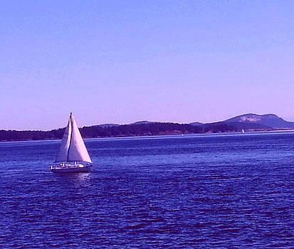 Nikki Dalton - Summer Sail